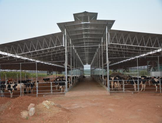 A Rest Of 14 Hours Day Is Considered Best For The Cow An Average Indian Only 9 Our Design Parameters Ensure Right Space